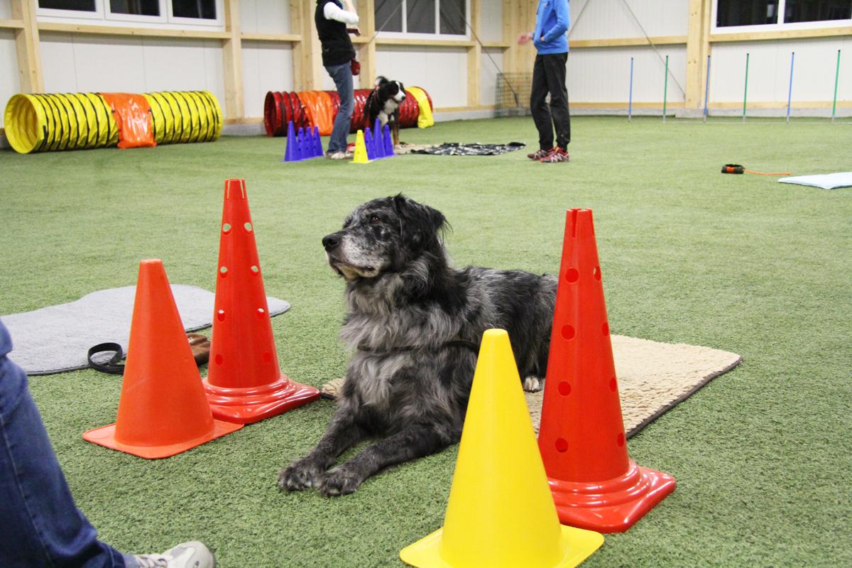 Umfangreiches Trainingsprogramm bei der Hundeschule Dog for fun Training