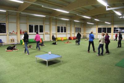 Trainingsfläche in der Halle der Hundeschule