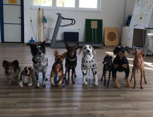 Impressionen aus der Hundschule