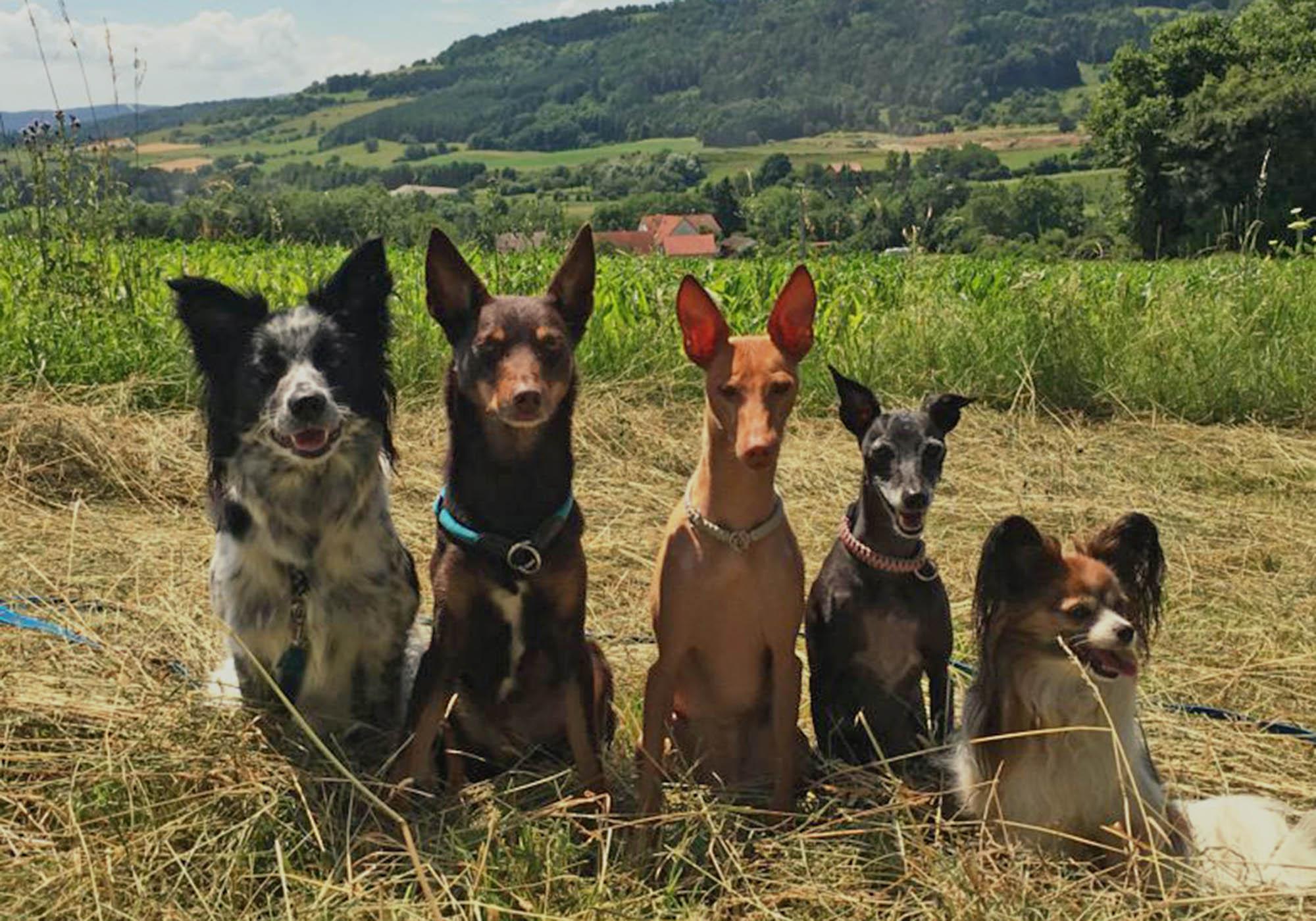 Hundeschule Dog For Fun Training, Fünf Hunde sitzen in der Reihe, draussen in der Natur